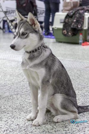 nitra_dog_04-2018_12_20180702_1937850933