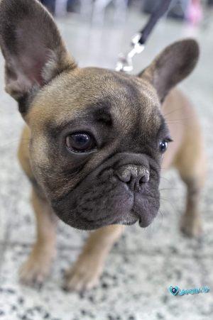 nitra_dog_04-2018_26_20180702_1366600635