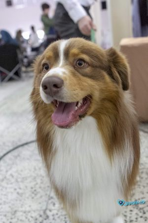 nitra_dog_04-2018_64_20180702_1689214042