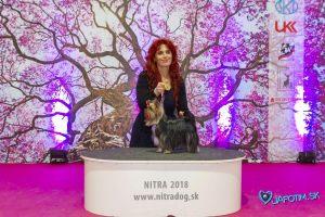 nitra_dog_04-2018_79_20180702_1490339783