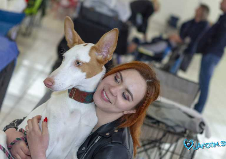 Nitra Dog 04-2018